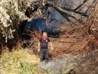 Yeşilhisar'da Çıkan Yangında Ağaçlar Kül Oldu