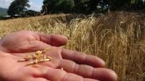 Eski Heybede Bulduğu Tohumları Ekti, Gözlerine İnanamadı