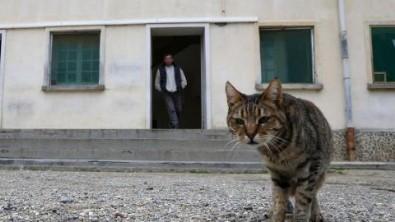 Hücreye kapatılan kedi firar etti