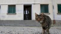 UYUŞTURUCU - Hücreye kapatılan kedi firar etti