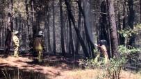 Aydos Ormanı'nda Çıkan Yangınla İlgili Bir Kişi Gözaltına Alındı