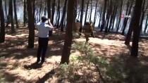 Pendik Kaymakamlığından Aydos Ormanındaki Yangına İlişkin Açıklama