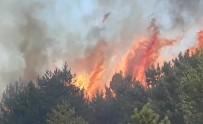 Kastamonu'da 200 Hektarlık Ormanlık Alanda Yangın Çıktı