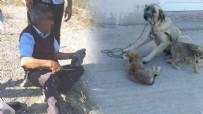 İÇ ÇAMAŞIRI - Kocaeli'nde yaşandı! Yaşlı adam köpeğe tecavüz ederken yakalandı