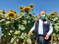 Mustafa Şahin Açıklaması 'Kayseri, Türkiye'deki Çerezlik Çekirdek Üretiminin Yüzde 18'İni Karşılamaktadır'