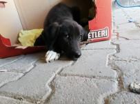 Yaralı Köpek Belediye Ekiplerince Hayvan Hastanesine Yetiştirildi