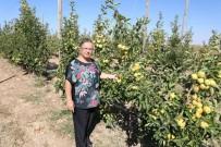 Eskişehir'de Bu Yıl 12 Bin Ton Elma Hasadı Bekleniyor