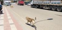 Sokak Köpekleri Vatandaşları Tedirgin Ediyor