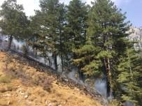 Pozantı'daki Yangını Söndürme Çalışmaları Sürüyor