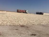 Büyükşehir'den Çiftçiye Hep Destek