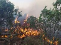 Elazığ'da Orman Yangını Açıklaması Çok Sayıda Ekip Sevk Edildi
