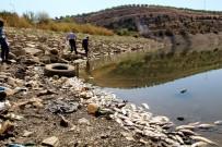 Manisa'da Sular Çekildi, Binlerce Balık Telef Oldu