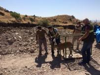 Tedavisi Tamamlanan Yaban Keçisi, Doğal Ortamına Bırakıldı