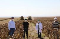 Eskişehir Tohumluk Ayçiçeği Üretiminde Türkiye İkincisi