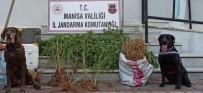 Manisa'da Drone Ve Narkotik Köpek Destekli Uyuşturucu Operasyonu