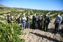 Tarım Ve Orman İl Müdürü Mustafa Şahin Açıklaması 'Kayseri Bağcılıkta Da Olması Gereken Yere Gelecek'
