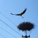 MEDAŞ'tan Kuşlar Ölmesin Diye İzolasyon Uygulaması