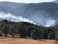 Sındırgı'daki Orman Yangınında 2 Hektarlık Alan Zarar Gördü