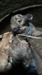Burhaniye'de Kuyuya Düşen Köpekleri İtfaiye Kurtardı