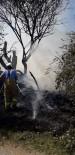 Burhaniye'de Ot Yangınında Ağaçlar Zarar Gördü