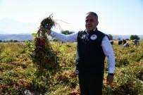 Kayseri'de Yetiştirilen Salçalık Domatesler Türkiye'ye Dağılıyor