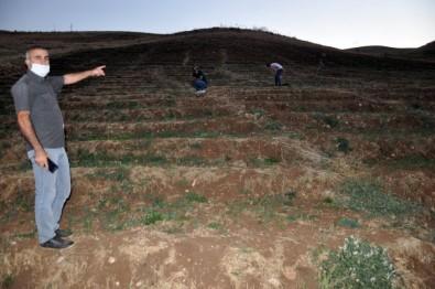 Bin 900 Rakımlı 15 Bin Dönüm Arazide Meşe Ağacı Yetiştiriciliği