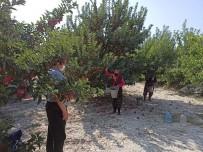 Eğirdir'de 20 Bin Elma İşçisi İçin Pandemi Denetimleri Artırıldı