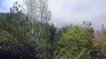 Eskişehir'de Otomobilde Çıkan Yangın Ormanlık Alana Sıçradı