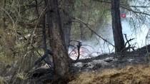 Eskişehir'in Mihalgazi İlçesinde Orman Yangını Başladı