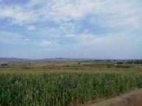 Manyas'ta 60 Bin Dekar Alanda Yemlik Bitki Üretimi Yapıldı