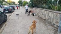 Sokak Hayvanları Susuz Kalmasın Diye Harekete Geçtiler