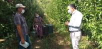 Kaymakam Çelik Elma İşçilerini Denetledi