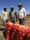 Beylikova'daki Soğan Üreticilerin Yüzü Güldü