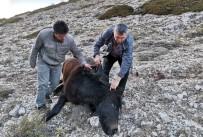 Amasya'da İki Yılkı Atı Silahla Vurulmuş Halde Bulundu