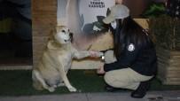 HAYDİ Ekipleri, Yeni Yıla Sokak Hayvanlarıyla Girdi