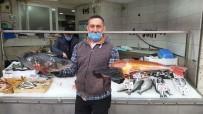 Batı Karadeniz'in İncisi Akçakoca'da Balık Bereketi