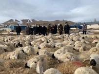 Bayburt'ta 'Köyümde Yaşamak İçin Bir Sürü Nedenim Var Projesi' Kapsamında Çiftçilere Koyunları Teslim Edildi