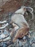 Tunceli'de Vurulan Dağ Keçisi Telef Oldu