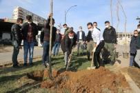 Cizre'de Daha Yeşil Bir Çevre İçin Çalışmalar Sürüyor