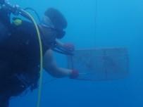 Denizde 'Kafes' İle Balık Avlarken Yakalandılar