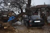Fırtınaya Dayanmayan Ağaç Aracın Üstüne Devrildi