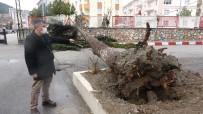 Fırtınaya Dayanamayan Çam Ağacı Böyle Devrildi