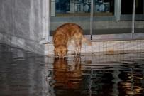 Şiddetli Yağmur Fethiye'de Su Baskınlarına Neden Oldu