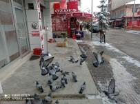 Sokağa Çıkma Kısıtlamasında Güvercinleri Beslediler