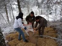 Bolu'da Yaban Hayvanları İçin Ormanlara Yem Bırakıldı