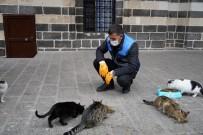 Diyarbakır'da Sokak Hayvanları İçin Belirli Noktalara Mama Bırakıldı