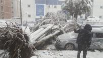 Kar Nedeniyle Ağaç Aracın Üzerine Yıkıldı