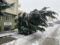 Karın Ağırlığına Dayanamayan Ağaç Araçların Üzerine Devrildi