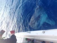 Oltaya Takılan Dev Balık Balıkçıları Şaşırttı