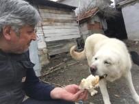 Hayırsever Fırıncı Sokak Hayvanlarını Besliyor